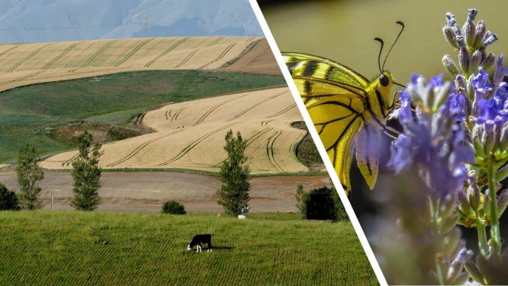 Monocultivos vs. biodiversidad